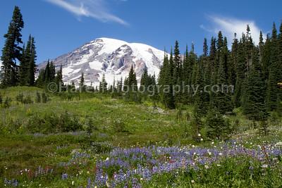 Mount Rainier-4688
