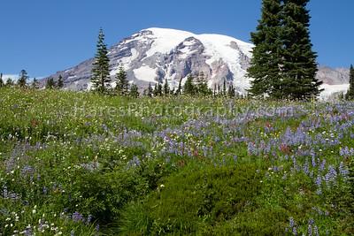 Mount Rainier-4701