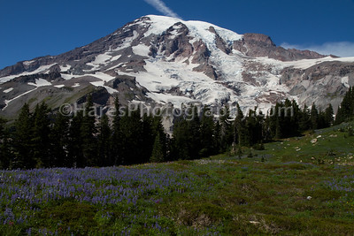 Mount Rainier-4732
