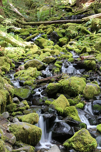 Olympic NP-3682