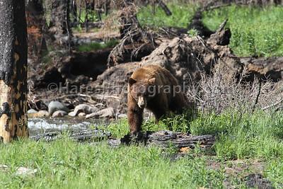 Yellowstone-4728