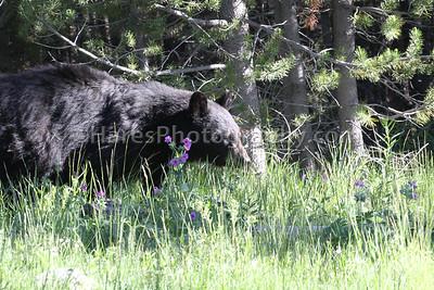 Yellowstone-4078