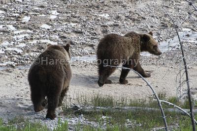 Yellowstone-4146