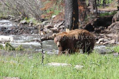 Yellowstone-4746