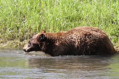 Yellowstone-4597