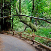 Looping trail by the Muir Woods Visitor Center