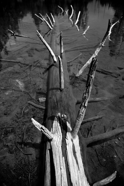 Dead log in String Lake