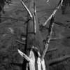 Dead log in String Lake