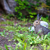 Rabbit by the side of a trail