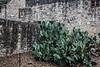CONYNGHAM_San_Antonio_1388