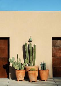 Tucson floral scene.