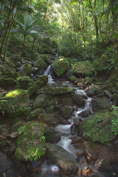 A small stream along the road side in the Caribbean National Forest of El Yunque