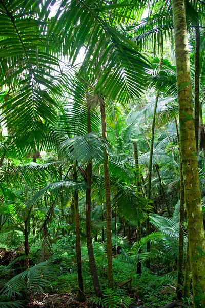 The Caribbean National Forest of El Yunque