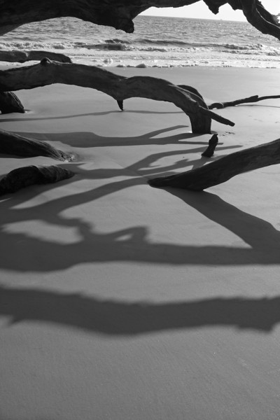 Driftwood Shadows at Sunrise