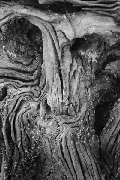 Driftwood Man