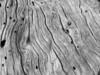 Gnarled Driftwood Details
