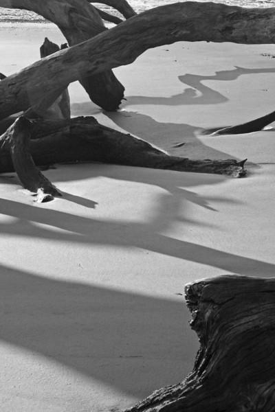 Driftwood Shadows at Sunrise