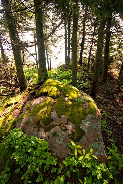 Near Otter Cliffs, Acadia