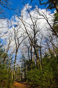Walden Woods, Concord, Massachusetts