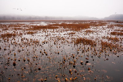 Great Meadows, Concord, Massachusetts