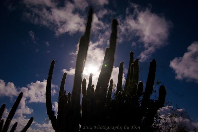 Full Moon thru the Cacti on STJ