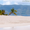 Sandy Spit, BVI (Corona Beer commercial Palm Tree)
