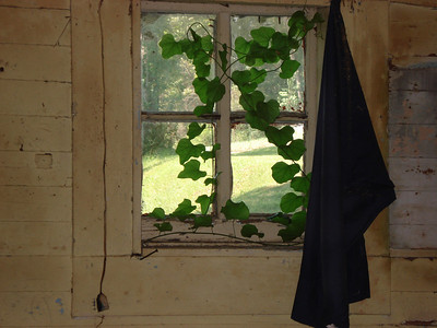 Ivy growing in storage area indicates crevices surrounding window. ck