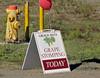 Stomping?!  Sacre bleu!! Napa Valley, California, Sun 23 October 2011.