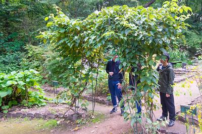Observing wild kiwi (matatabi) at Sapporo Botanical Gardens