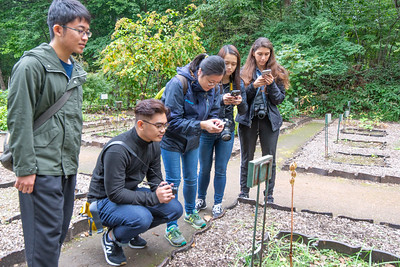 Observing Ubayuri at Sapporo Botanical Gardens