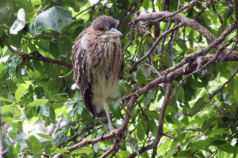 Grumpy Bird View 2