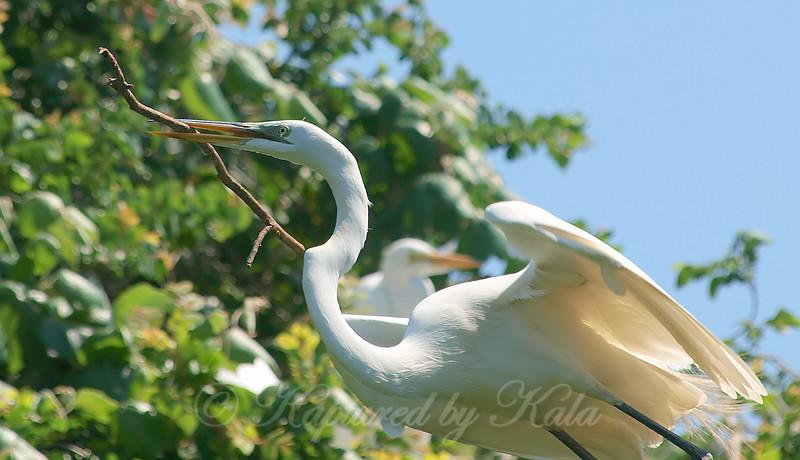 Nesting Stick
