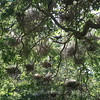Community Nesting