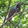 Secretive Bird