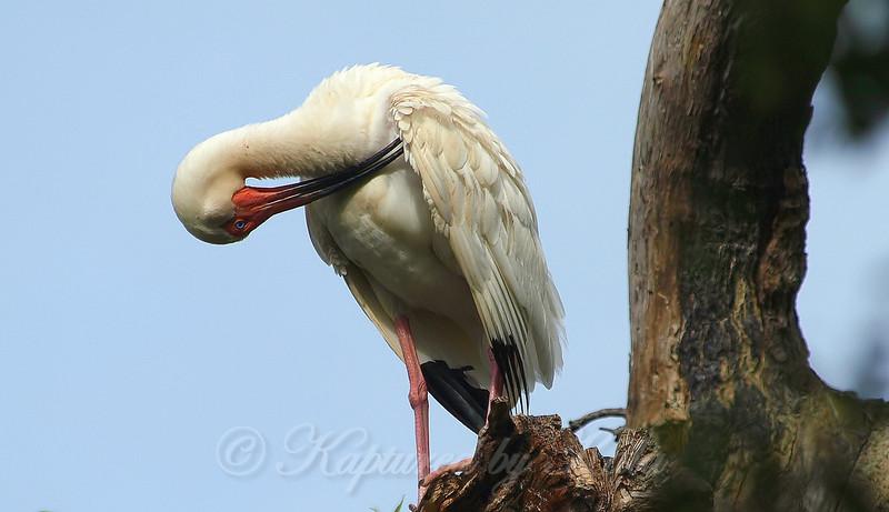 Preening With Your Eyes Open