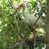 Standing On Nest