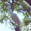 Nest Stick View 2