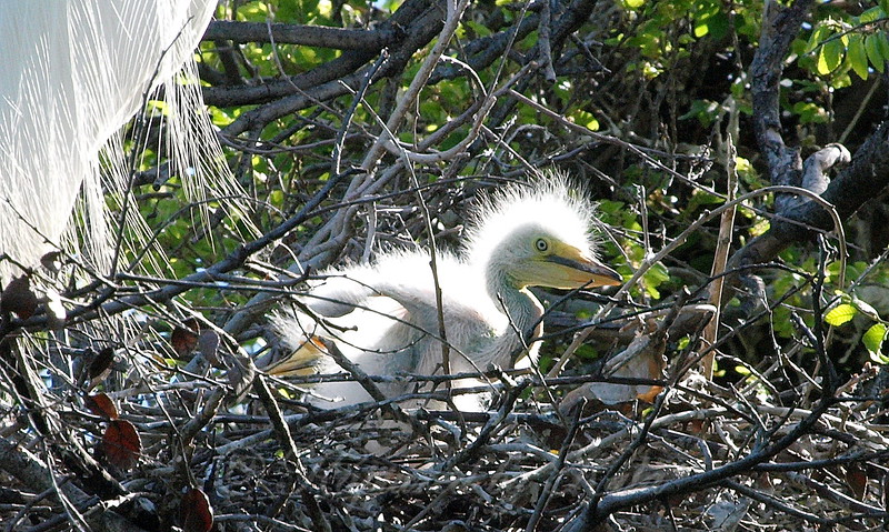 More Pterodactyl Than Egret