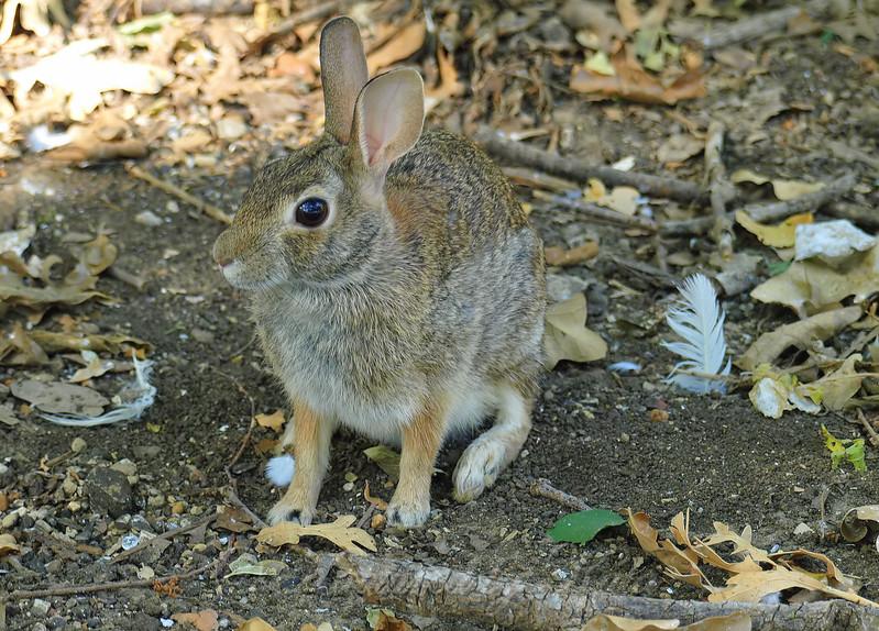 Last Photo Of The Rookery Rabbit