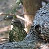 Hawk Lost Prey View 1