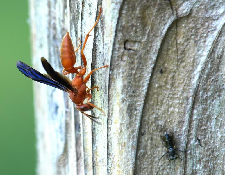 Photobombed By A Tiny Robber Fly