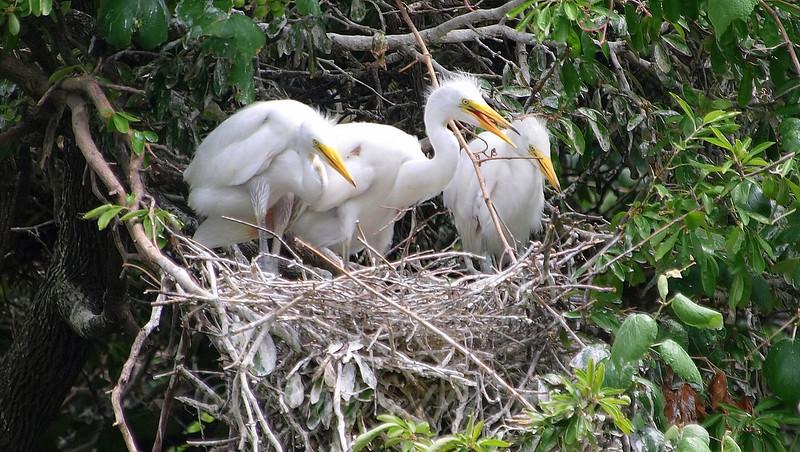 Nest Full Of Babies