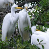 Egret Punks Hanging Out On The Corner