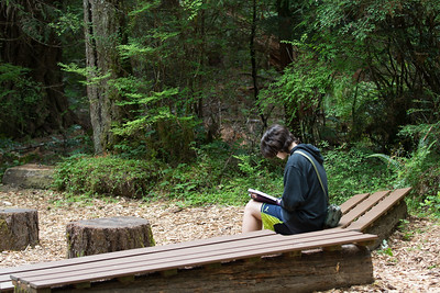 reading a book in the cathedral of the woods