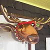 Merry Christmoose  !!  This amorous guy is sporting some go-anywhere moosletoe, too !