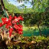 Mangrove 紅樹林