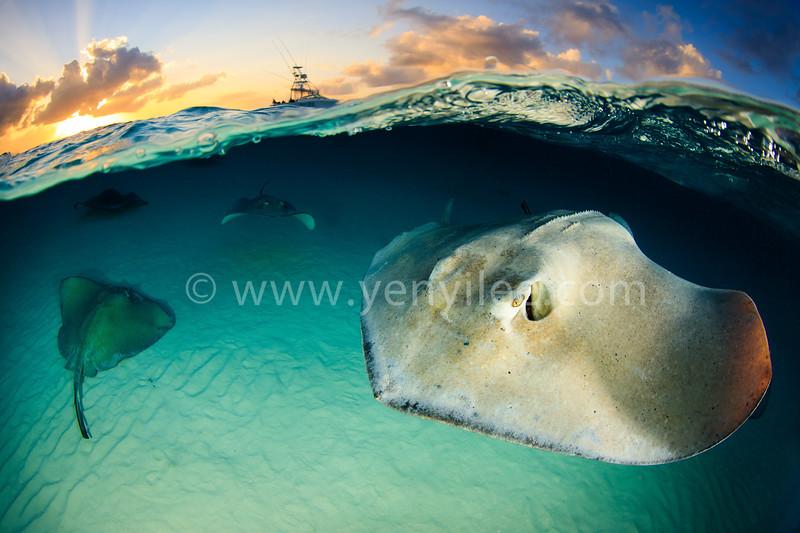 Stingray City (日落魟魚城) @ Grand Cayman (開曼群島)