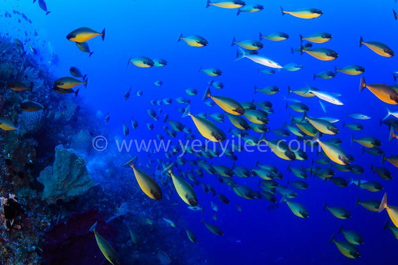@ Banda Sea, Indonesia