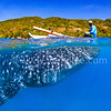 Fisherman and Whale Shark @ Oslob, Cebu, Philippines