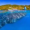 Fisherman and Whale Shark (漁人與鯨鯊) @ Oslob, Cebu, Philippines (菲律賓 宿霧 歐斯陸)